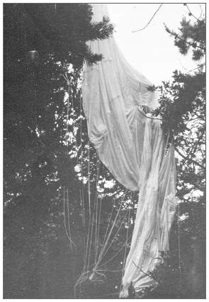 Parachute of Sgt. William John Haslam in tree
